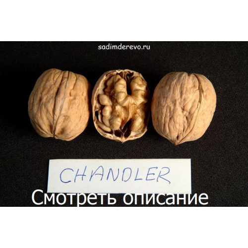 Саженцы Грецкого Ореха Chandler - отзывы и описание
