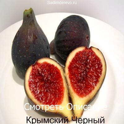 Инжир Крымский Черный