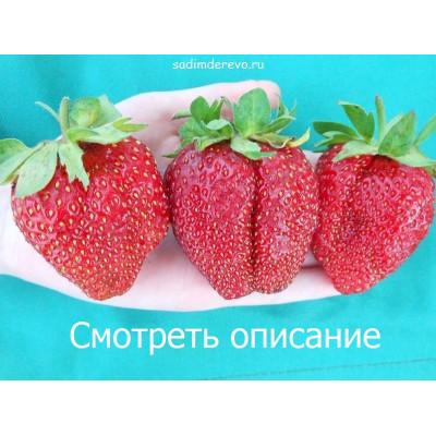Клубника Хуми Гранде